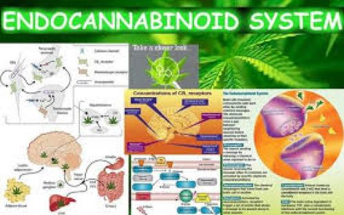 Endocannabinoid system as a regulator of tumor cell malignancy – biological pathways and clinical significance