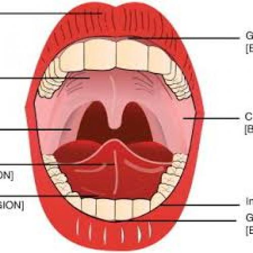 Cannabis Under The Tongue Gives Rapid Relief and Lowers the High