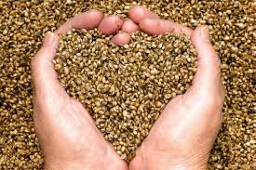Hemp Seed Contains Compounds Called TPA That Significantly Reduce Brain Inflammation