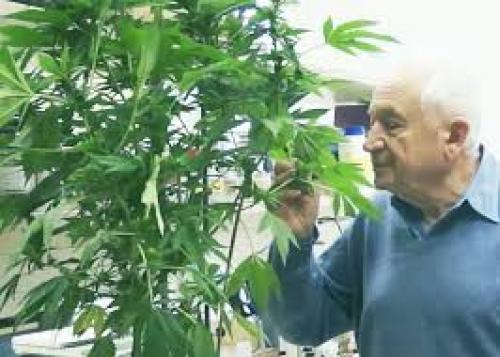 The Scientist (2015) Medical Marijuana: Studying For a Higher Purpose - Prof. Dr. Raphael Mechoulam