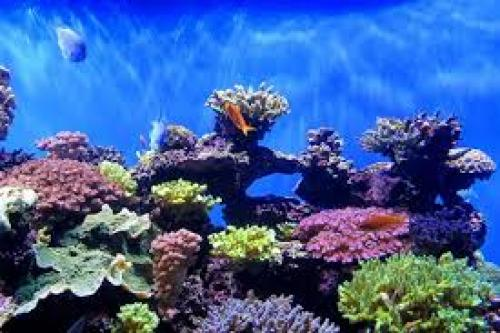 Reefs At Risk - Hawaii bans sunscreens with oxybenzone