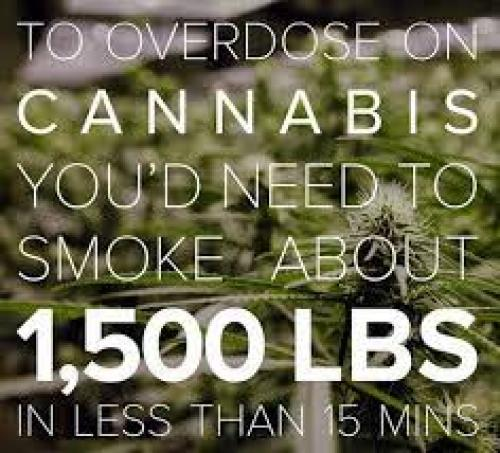 Why you will never overdose on cannabis