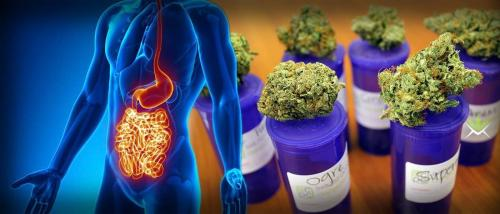 Cannabis Is Curing Stomach And Bowel Diseases Considered Incurable