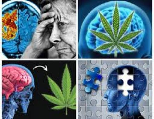 Alzheimer's Disease and Cannabis ~ Grow Legally